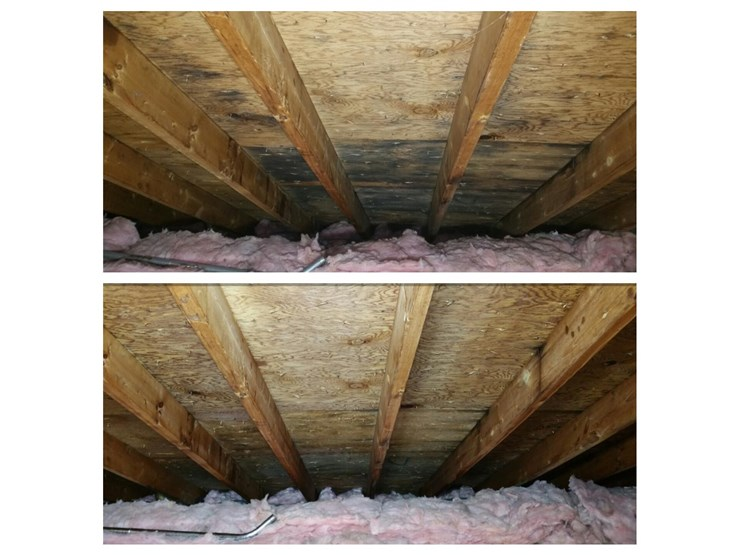 home walls mold removal in danbury