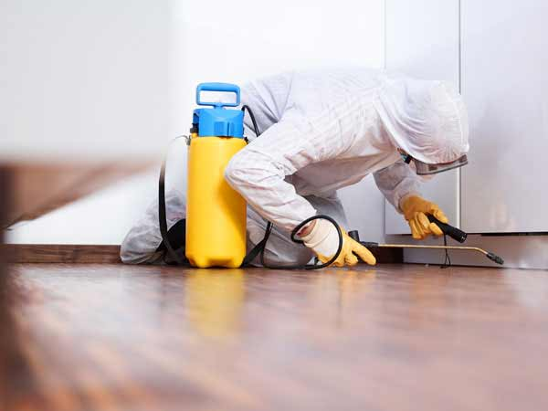 Your Source for Mold Remediation Services in Corona