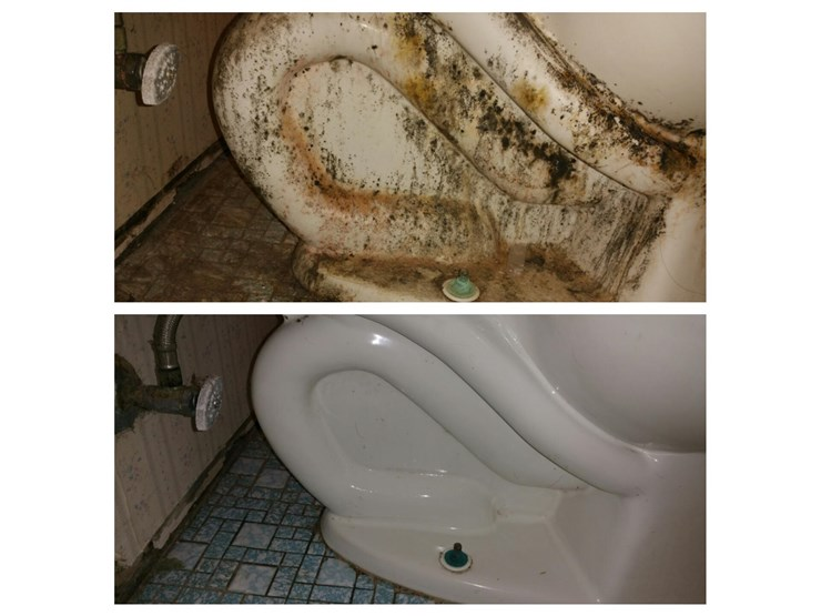 bathroom mold removal in danbury